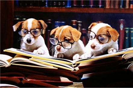 dogs-reading-books.jpg